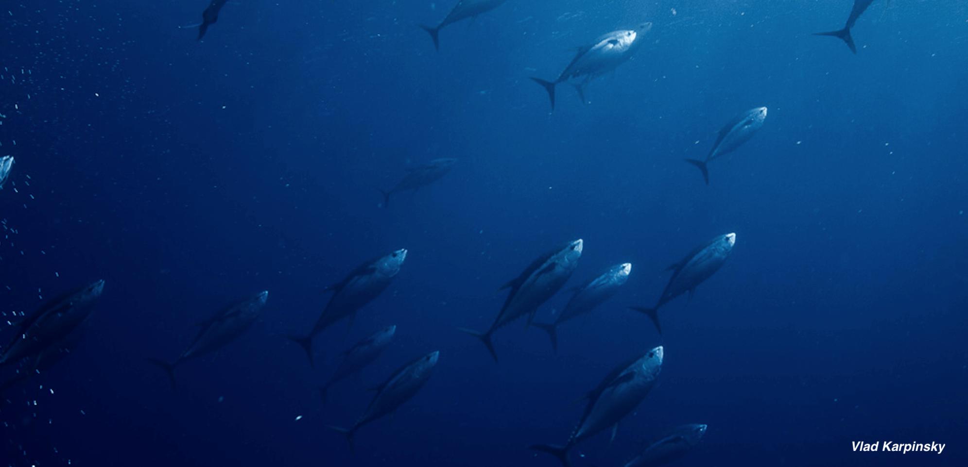 European Parliament Members Discuss Future of Fisheries Management